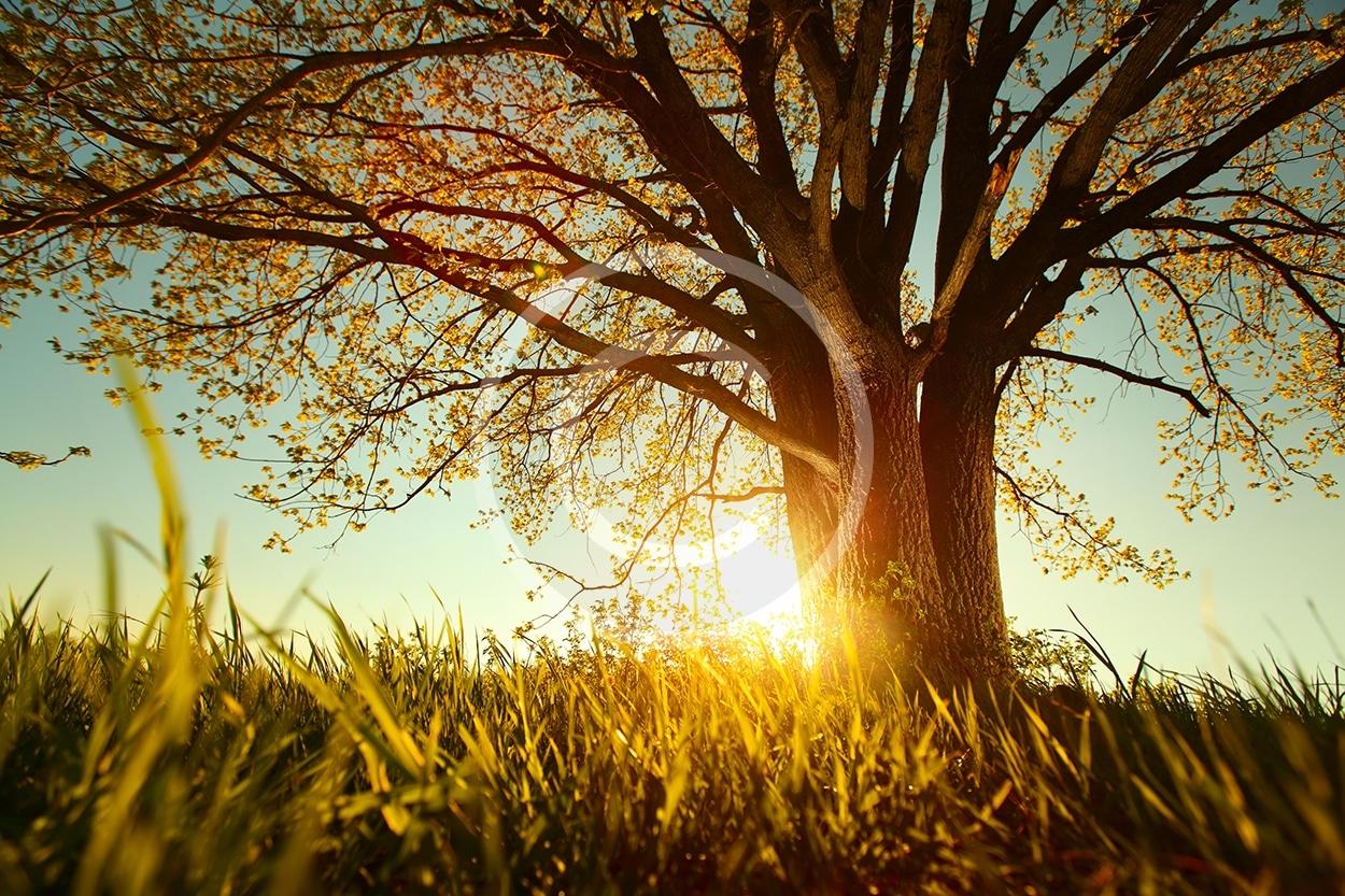bigstock-Spring-tree-with-fresh-leaves-48484163.jpg